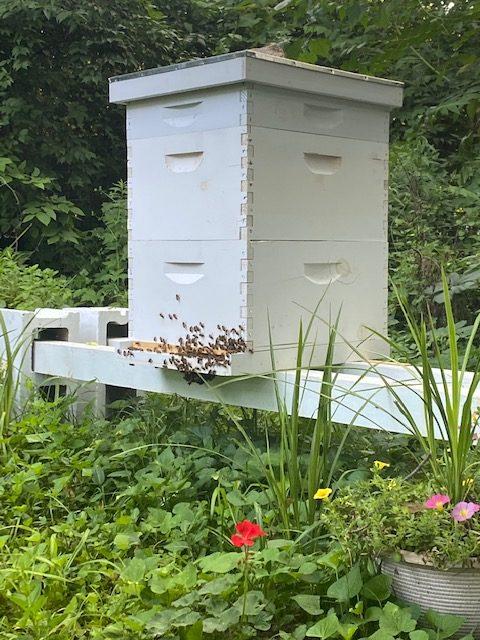Hive on Wabash