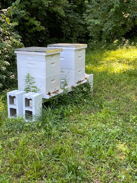 First Hives at Wabash
